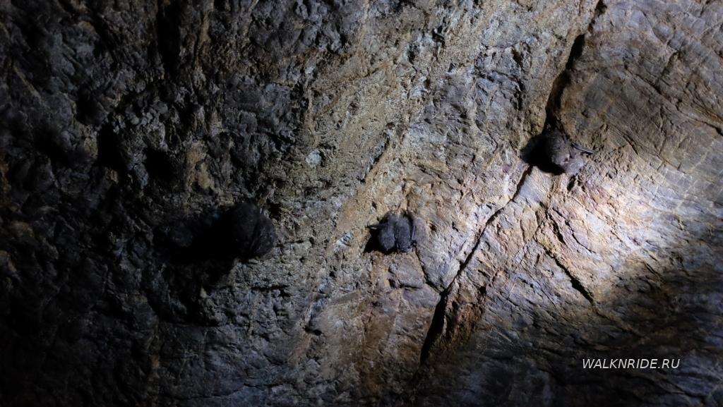 Летучие мыши Барсуковской пещеры